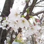 花見は最高~ (^^)